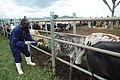 VETCAP Uganda, September 2011 (6191337189).jpg