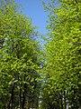 Veliky Novgorod, Novgorod Oblast, Russia - panoramio - ionyn (1).jpg