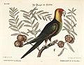 Verzameling van uitlandsche en zeldzaame vogelen (Tab. XXIII) (7894159066).jpg