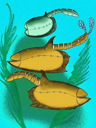 Vetulicola - Vetulicola rectangulata and V. cuneata