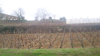 Vignoble de Saint-Aubin 1.JPG