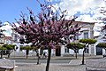 Vila Vicosa, Portugal (48547161197).jpg