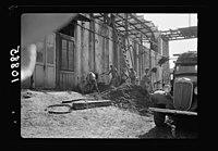 Vintage activities at Richon-le-Zion, Aug. 1939. Trucking away the refuse (grape skins) for fertilizer & fuel LOC matpc.19784.jpg