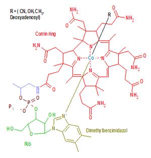 Corrinoid - Image: Vitamin B12