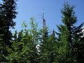 Vylet k Cernemu jezeru Sumava - 9.srpna 2010 65.JPG