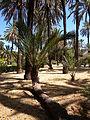 Walk in Palermo's streets (3766166665).jpg