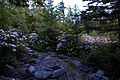 Walking-trail-spring-rocks - West Virginia - ForestWander.jpg