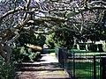 Walkway in Pince's Gardens, Exeter - geograph.org.uk - 343806.jpg