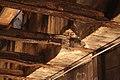 Water Damaged Steel Beam . (6944506315).jpg
