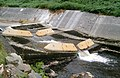 Weir on the River Dunsop - geograph.org.uk - 33115.jpg