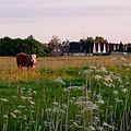 Wesselburen pfingstabend kalb 27.05.2012 21-16-32.jpg