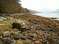 West shore of Loch Fyne - geograph.org.uk - 261275.jpg
