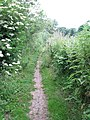 Wherryman's Way - narrow path along the river - geograph.org.uk - 1358372.jpg