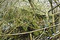 Wierzenica water mill, ruins.JPG