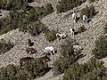 Wild Horses of Placitas.jpg