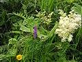Wild plants, Milltown - geograph.org.uk - 1404842.jpg