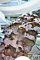 Willamette Meteorite - www.joyofmuseums.com - American Museum of Natural History.jpg