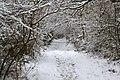 Winter Path (8409144313).jpg