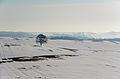 Winterlandschaft bei Schwaan.jpg