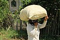 Woman carrying a bag of rice on head in Bohol.jpg