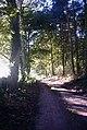 Woodland Bridleway - geograph.org.uk - 266298.jpg