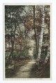 Woodland Path, Lenox, Mass (NYPL b12647398-75728).tiff