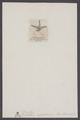 Xenaster - Print - Iconographia Zoologica - Special Collections University of Amsterdam - UBAINV0274 007 02 0054.tif