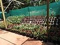 Yercaud 44th Flowershow-18-yercaud-salem-India.jpg