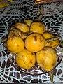 Zard loquat (Eriobotrya japonica).jpg
