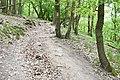 Znojmo-Popice-cesta-z-Trouznického-údolí-nahoru-na-Sealsfieldův-kámen2019.jpg
