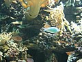 Zoo2007 img 5905.jpg