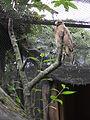 Zoo Kathmandu Nepal (5086482310).jpg
