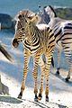 Zoo ZH DSC 3901 (4835732718).jpg
