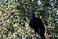 Zoo of Ahmedabad, India (4052623978).jpg