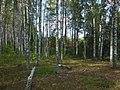 Zubtsovsky District, Tver Oblast, Russia - panoramio (85).jpg