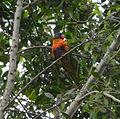 (1)Birds Kensington Park 031a.jpg