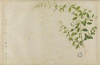 (Folhas e flores)