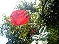+flower-A.jpg