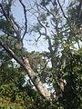 Árvore na subida da serra.JPG