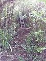 Échelle sur le sentier de takamaka vers l'îlet à Banane - panoramio.jpg