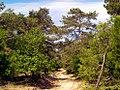 ΔΑΔΙΑ δάσος.jpg
