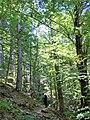 Το δασος στον Εννιπεα.jpg