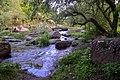 Баранячі лоби у Древлянському парку.jpg