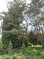 Ботанічний сад ДНУ 30.JPG