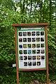 Ботанічний сад НУБіП DSC 0528.jpg
