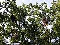 Буго-Деснянський колонія чапель.jpg