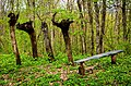 Бутова гора, Шишацький район - 2016-04-17 030.jpg