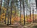 Великий Ліс (лісовий заказник, Сокальський район).JPG