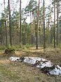 Весна - panoramio - Александр Фукс (2).jpg