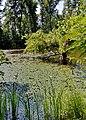 Гідропаркові озера 02.jpg